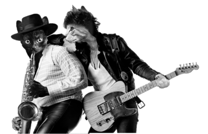 Bruce Springsteen's Born to Run album cover with cat faces in place of Clarence Clemmons and Springsteen's faces.